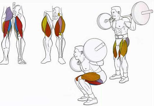 приседания со штангой - нагрузка на мышцы